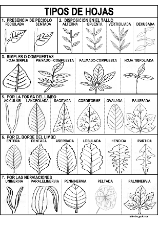 hojas diferentes: