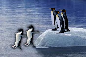 pinguino1