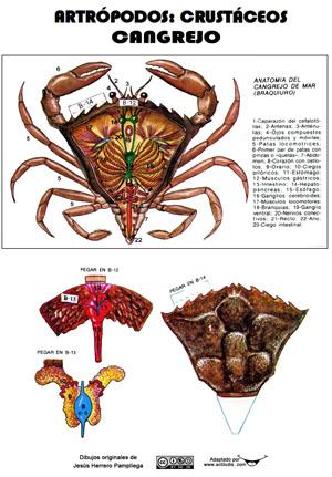 maquetas invertebrados.qxd