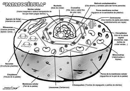 ACTILUDIS » CIENCIAS NATURALES