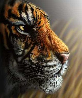 tigersmall