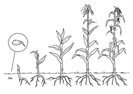 Dibujos de reino vegetal para colorear - Imagui