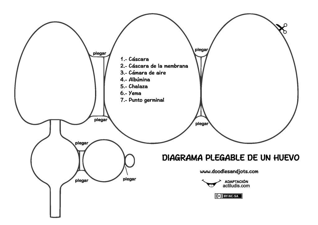 Recortable anatomía de huevo